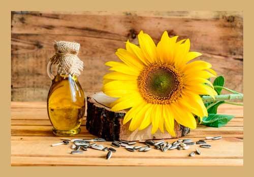 Семена подсолнечника для очистки крови и улучшения кровотока
